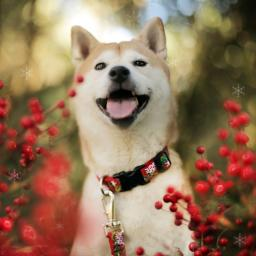 Holiday Collection for Dogs category image
