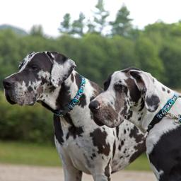 MicroBatch Designs for Dogs category image