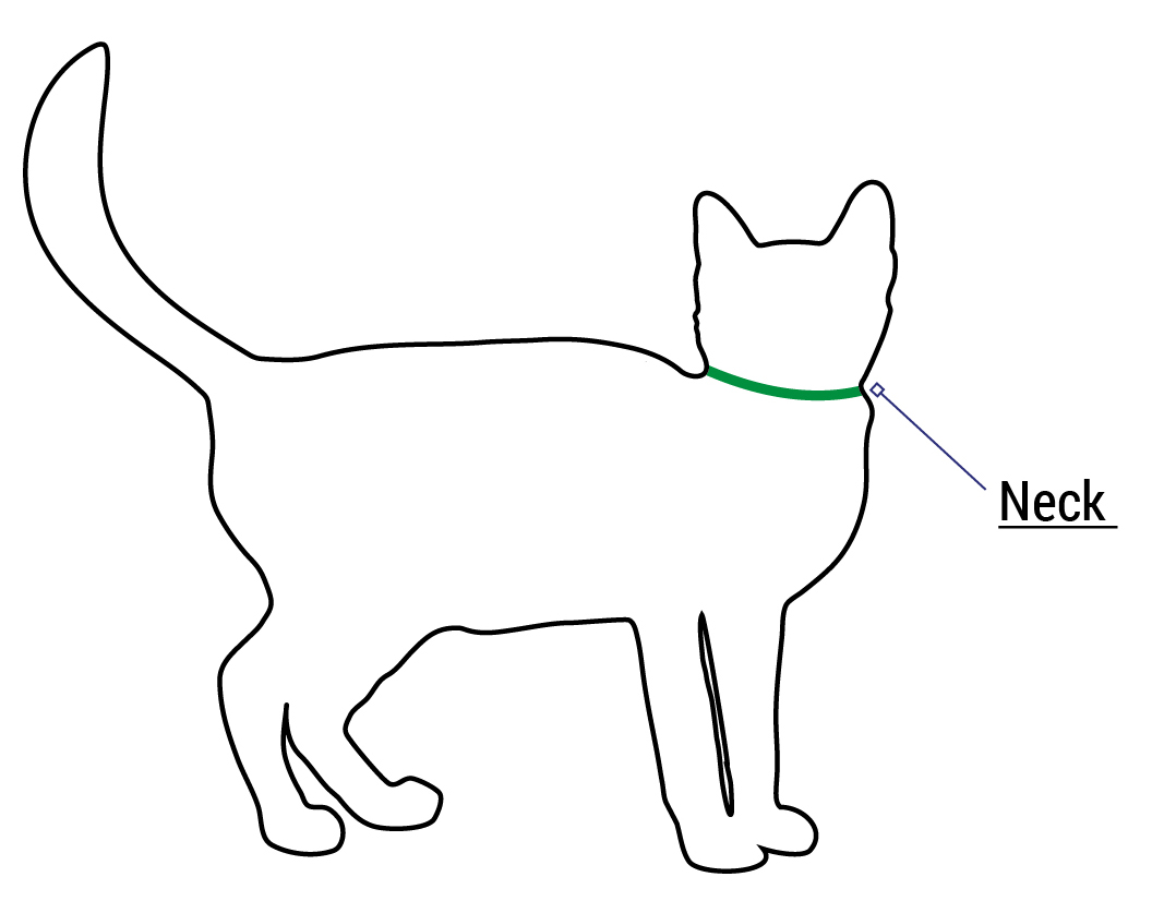Cat Safety Collar Fitting and Sizing Help