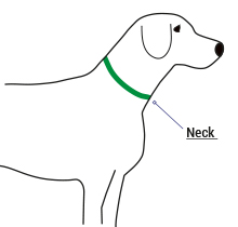 Dog Collar Fitting and Sizing Help